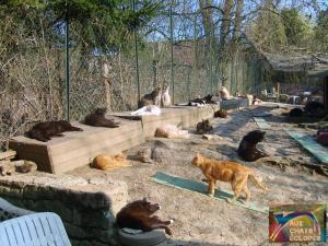 Nouveau-chats-eclopes Mini_647608S5002011