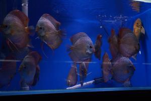[Photos] Voyage Hong Kong - poissons Mini_677855DSC03566
