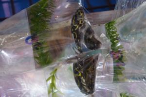 [Photos] Voyage Hong Kong - poissons Mini_696063DSC03561