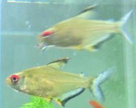 3 poissons à identifier Mini_700625Sanstitre6