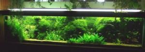 La culture des plantes en aquarium et la reproduction