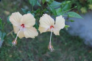 Floraisons du mois de juillet - Page 12 Mini_731429IMG3289
