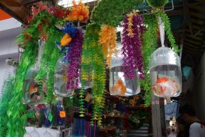 [Photos] Voyage Hong Kong - poissons Mini_737002DSC03571
