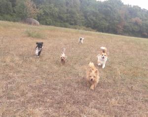 Dogwalker = le promeneur de chien Mini_7397581001balade