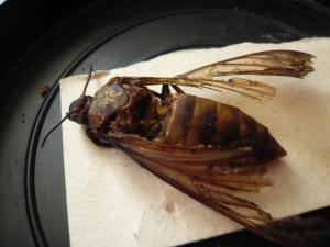 Insecte volant non identifié Mini_783164P1060218