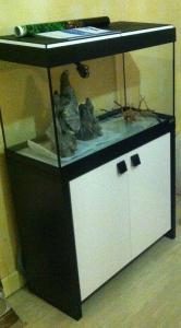 Aquarium 125L - asiatique- sable et déponit Mini_906513IMG1028