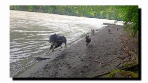 Dogwalker = le promeneur de chien Mini_954035les5