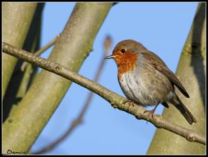 Oiseaux ...  (Staffilou) Mini_957266IMG61800