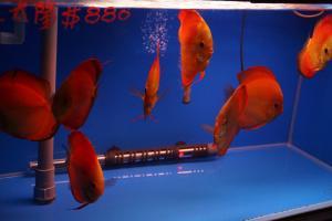 [Photos] Voyage Hong Kong - poissons Mini_966940DSC03567