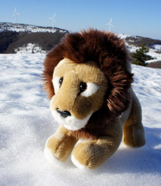 Concours photos n°3 : une MT en hiver 115412Wndoclqm1