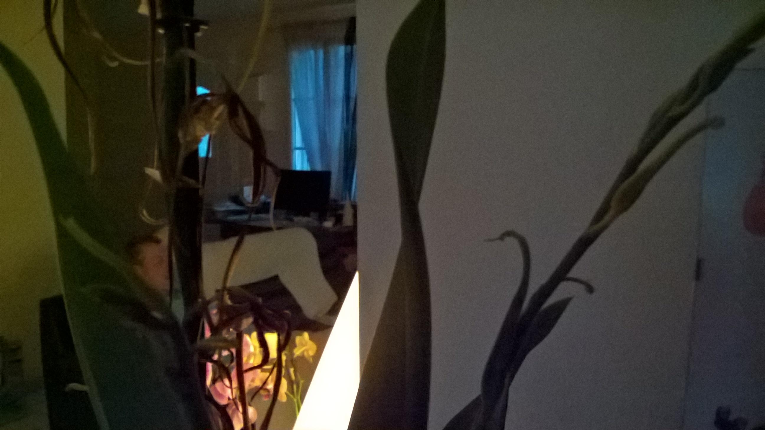 Brassia hybride 116058WP20160623221220Pro
