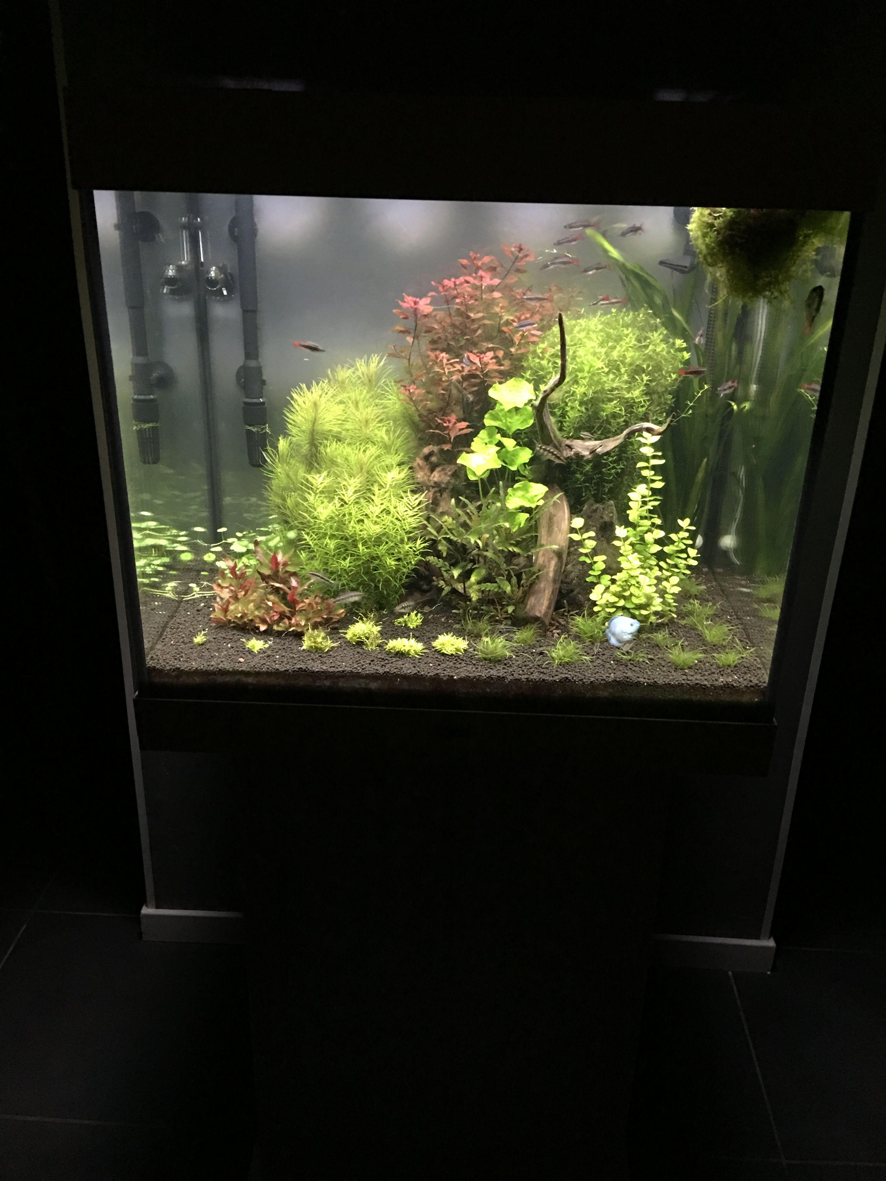 Juwel Lido 200 (Asiatique) - Daytime LED 80w - JBL i1501 - Page 6 122295IMG1409