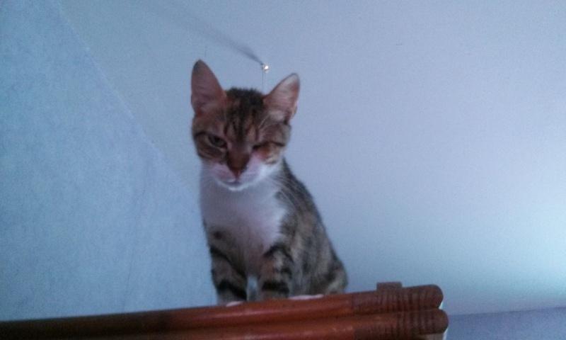 DUCHESSE - chatte femelle, née 2011/2012, borgne - (PASCANI) - adoptée par Chantal Pascal (dpt 63) - Page 3 1223497547