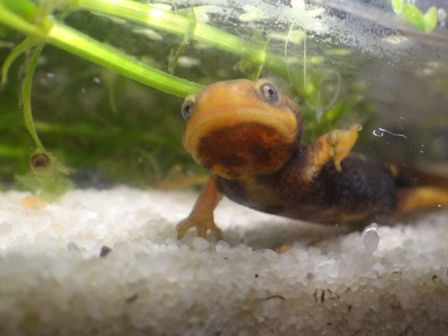 Ma Fish'étagère et les autres  - Page 15 126136DSC00281