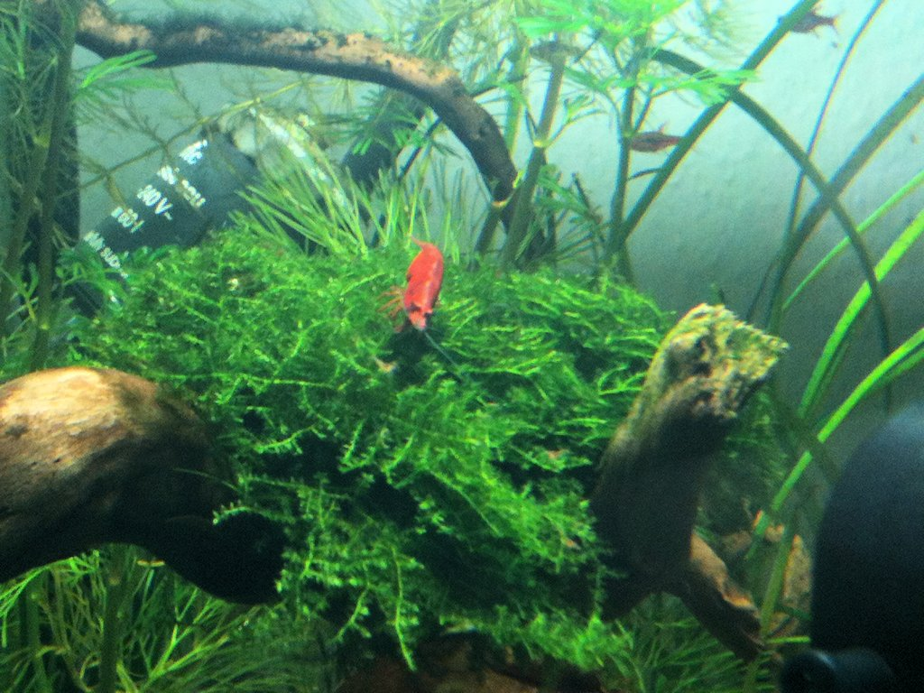 Mon Scaper's Tank 50L Aquascaping - Page 2 126296IMG0467