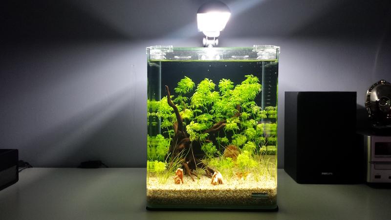 20 litres Naturel / Low tech / Sable et éclairage seulement 126713Jour071
