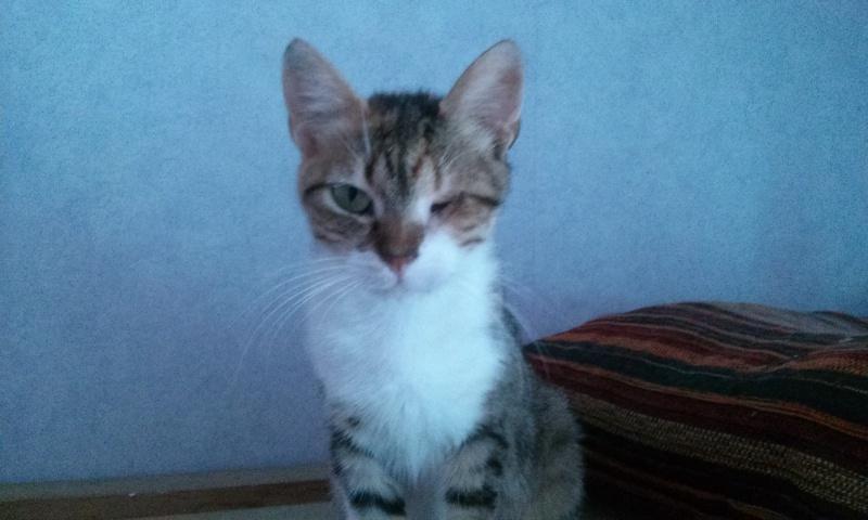 DUCHESSE - chatte femelle, née 2011/2012, borgne - (PASCANI) - adoptée par Chantal Pascal (dpt 63) - Page 3 1276512946
