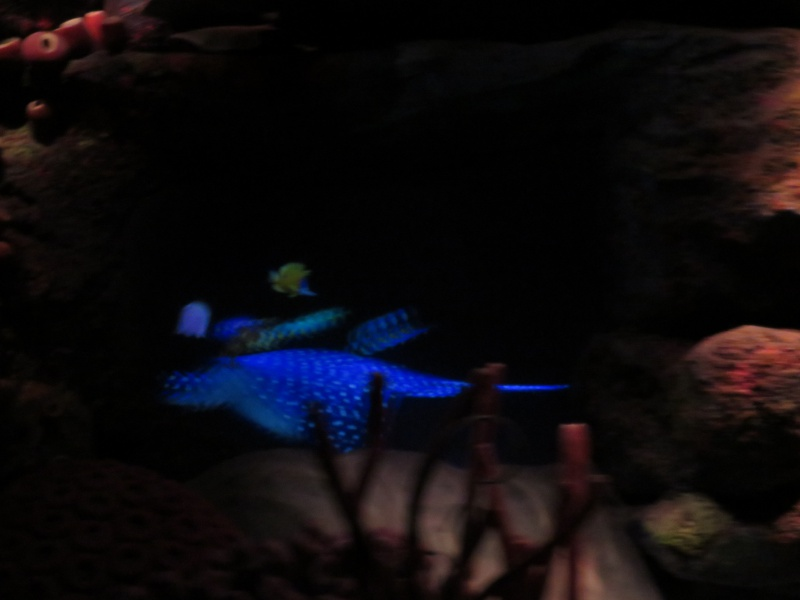 Walt Disney World + Universal Studios + Sea World + Busch Gardens Summer 2014 128866IMG0241