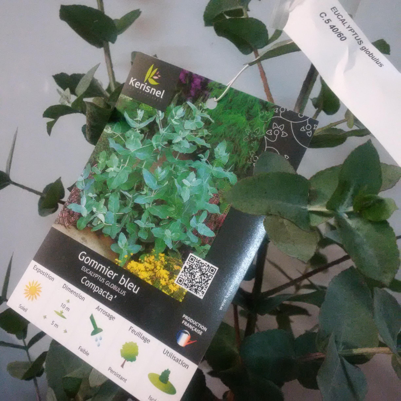 pourriture et feuilles d eucalyptus - Page 2 133476IMG20160205201528