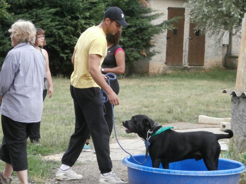 Rando' chien, seconde édition! 135917P6142743