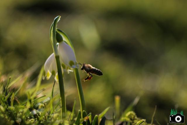 Je n'aime que toi petite fleur des champs... 138496IMG0045f8