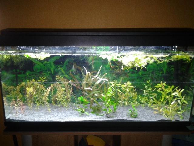 Je vous présente mon aquarium! =D 142950aquariumdudbut18janvier