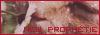 LGDC- Nouvelle Prophétie