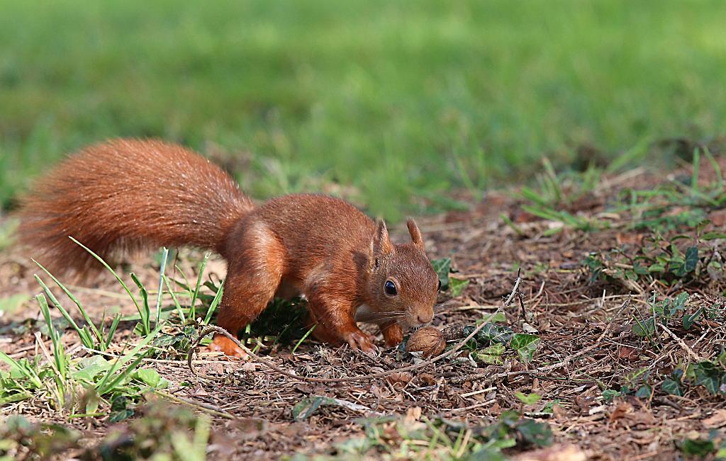 Mes petits copains écureuils. 144310273
