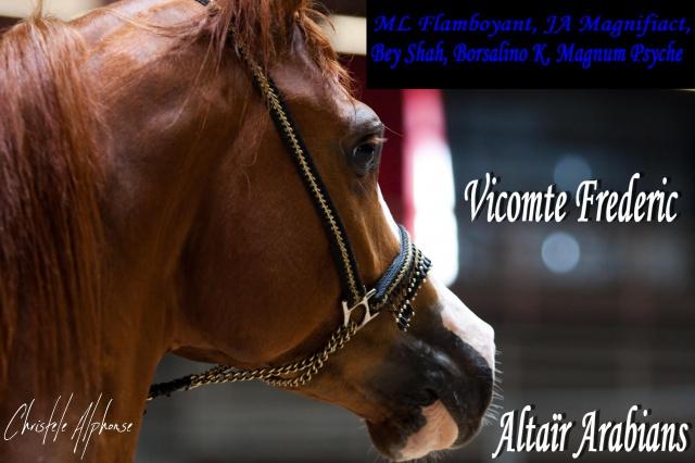 Vicomte Frederic: Alezan sabino, top origines américaines 147201montaefreddie3
