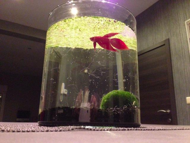 Mon SuperFish Home 25 150112IMG0030
