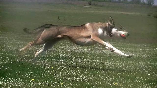Photo de nos chiens batards! 150485305724251296005015567273612775n