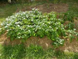 Apprentissage agraire, famille Valtin 150912IMGP1616