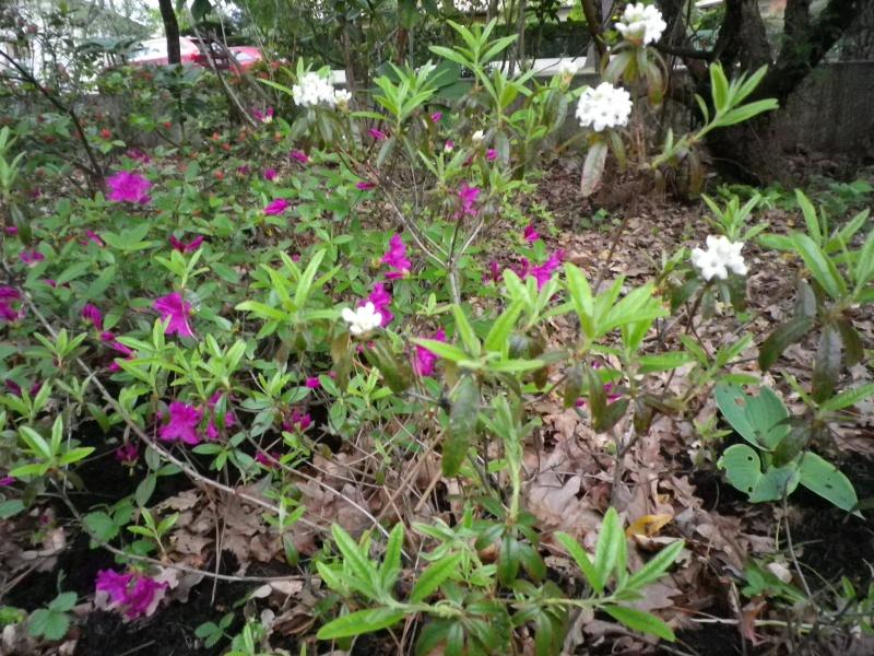 Quelques floraisons - Page 2 151354IMGP3133