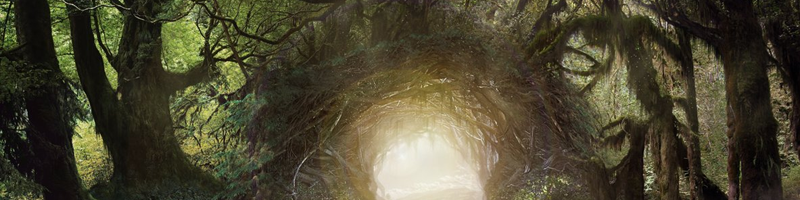 https://2img.net/r/hpimg15/pics/152007forest.png