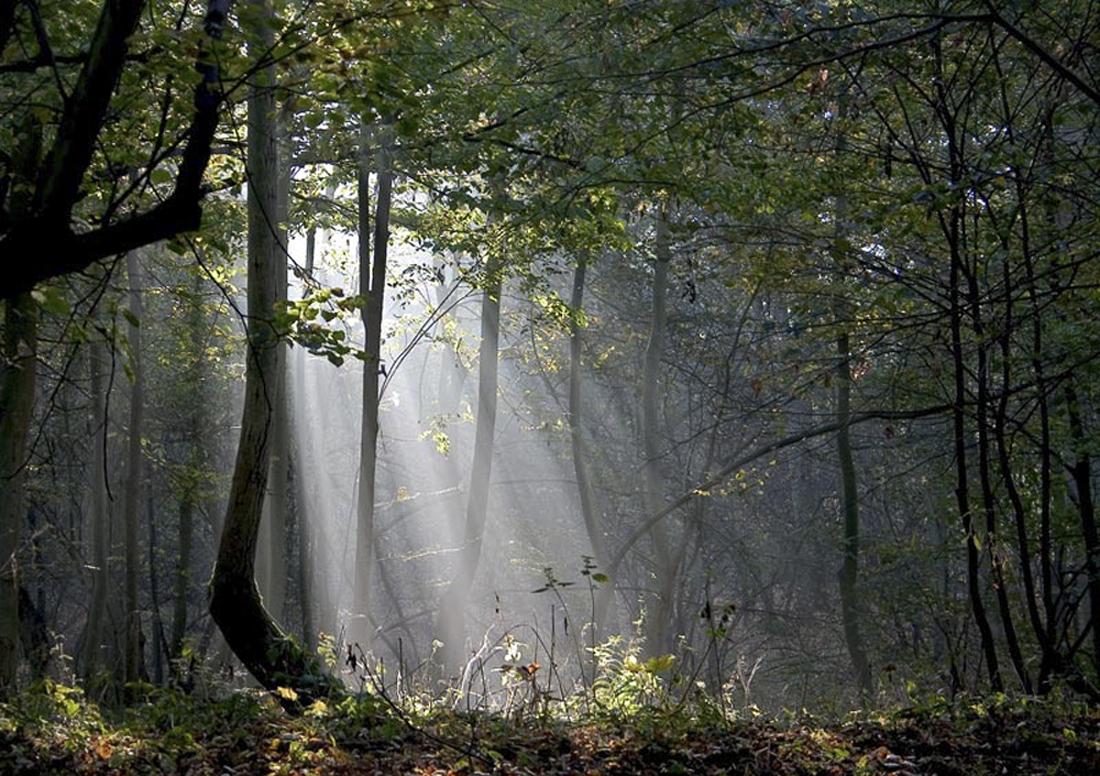 [fil ouvert] la forêt dans tous ses états 153461Lafortvisite