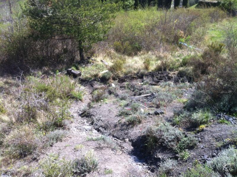 spot a quillan(11500) 153509P033