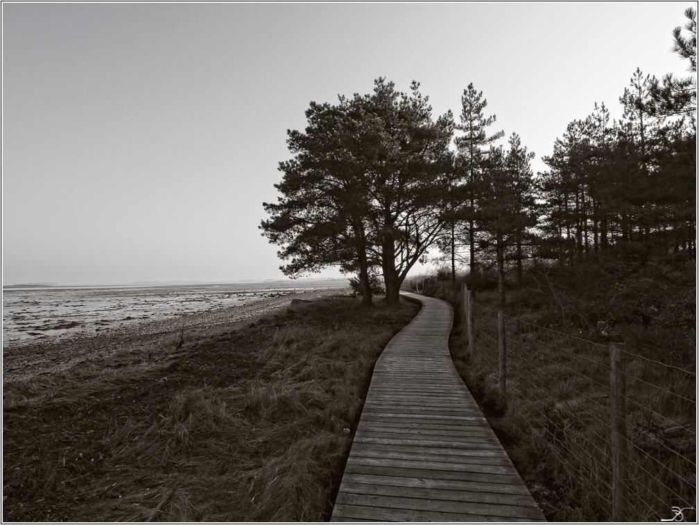Morbihan, Le Duer, sentier cotier 155098LR6P3180007Modifier