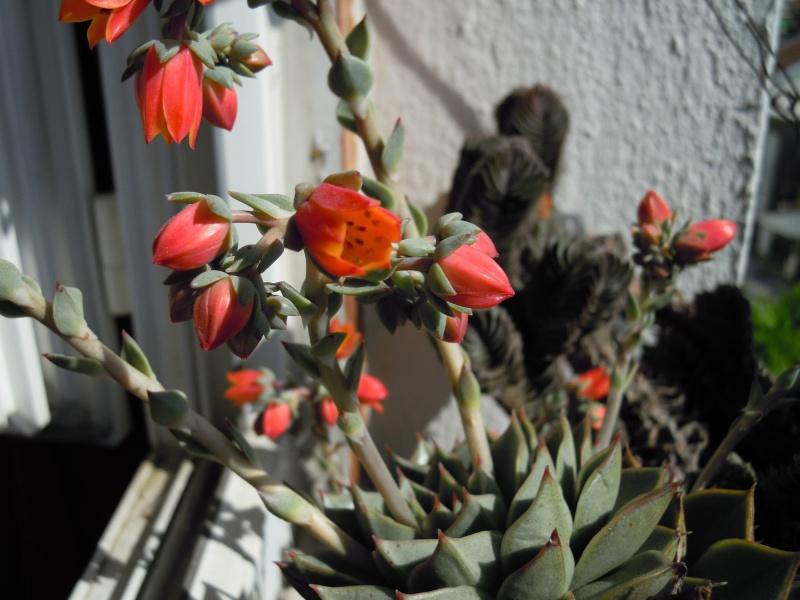 fraicheur et rayon de soleil sur les rebords de fenêtres... 155519fabiolafleurs102