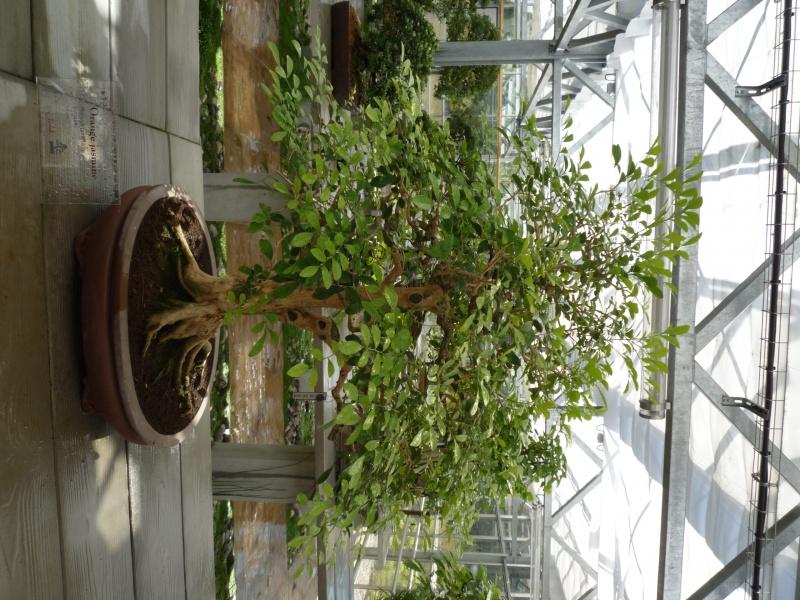 arboretum 155596P1070900