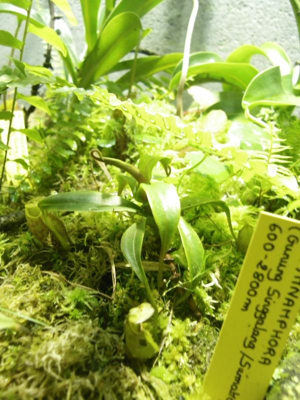 Mon terrarium highland 156657IMGP1844
