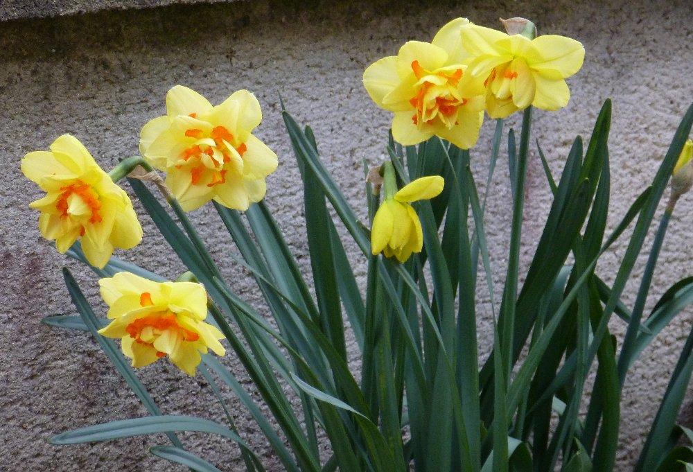 Encore quelques floraisons... 159864P1010669