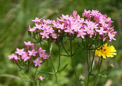نباتات وأعشاب بلادي 1599015591574835636416974931555965735n