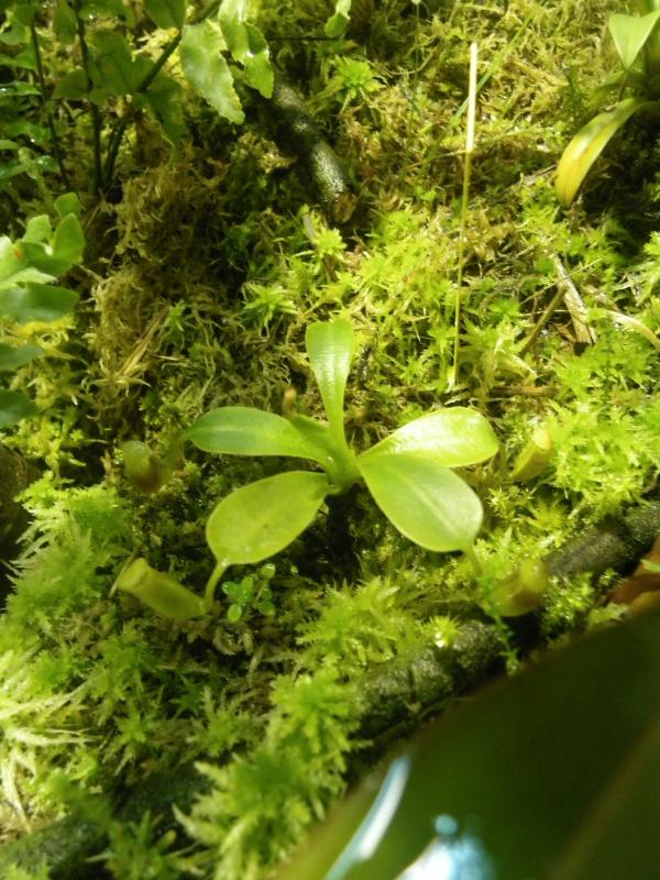 Mon terrarium highland 160216IMGP1849