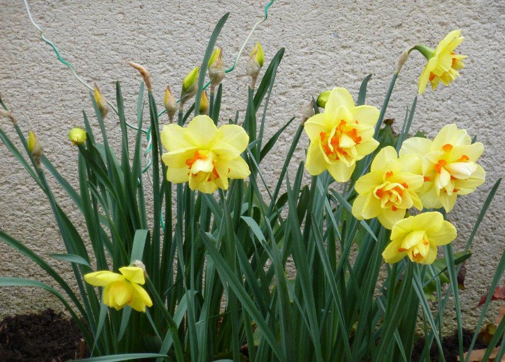 Encore quelques floraisons... 163015P1010668