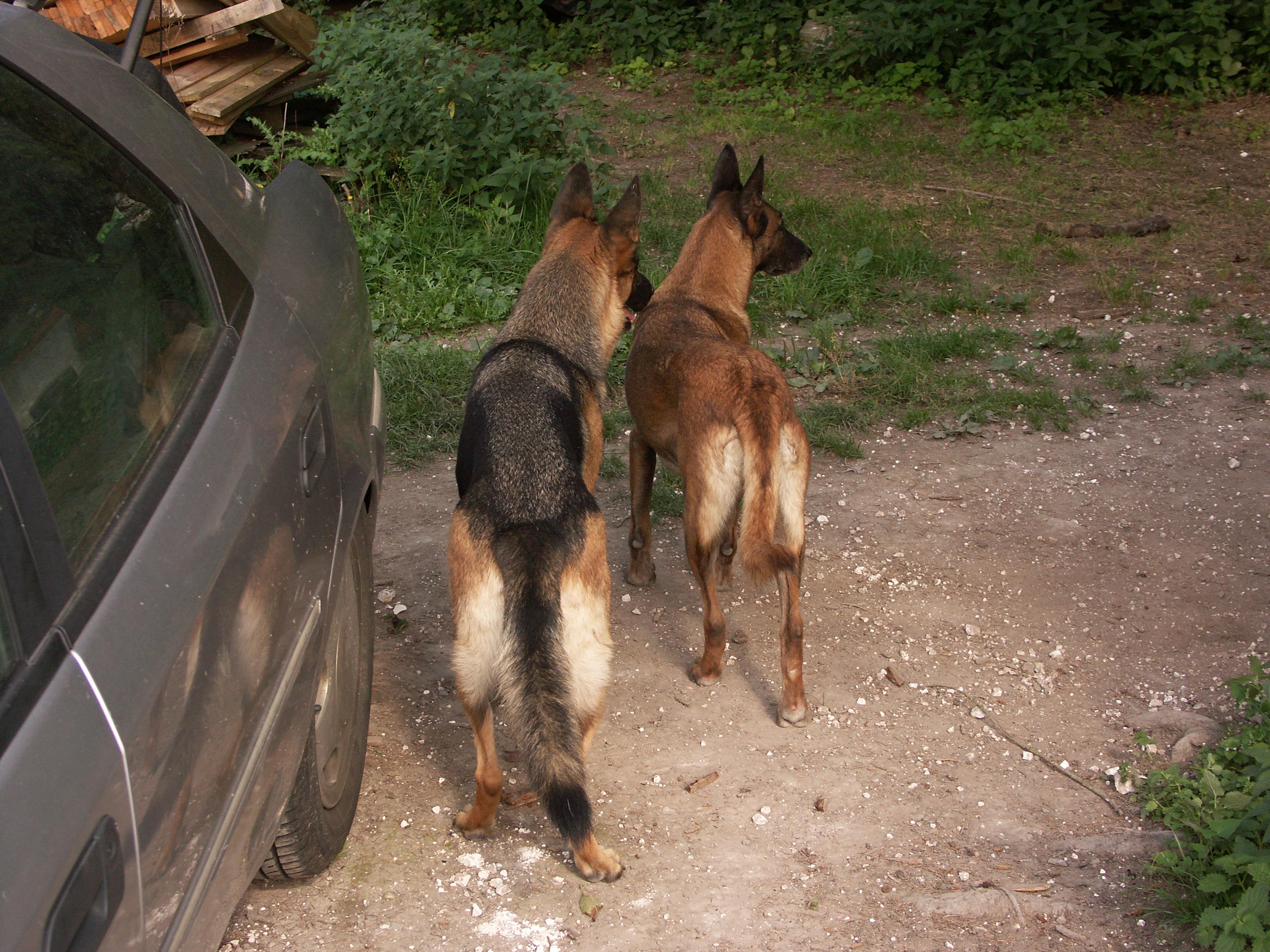 mes deux chiennes vont mourir... - Page 4 16910020060907003VelennesScaryUlna