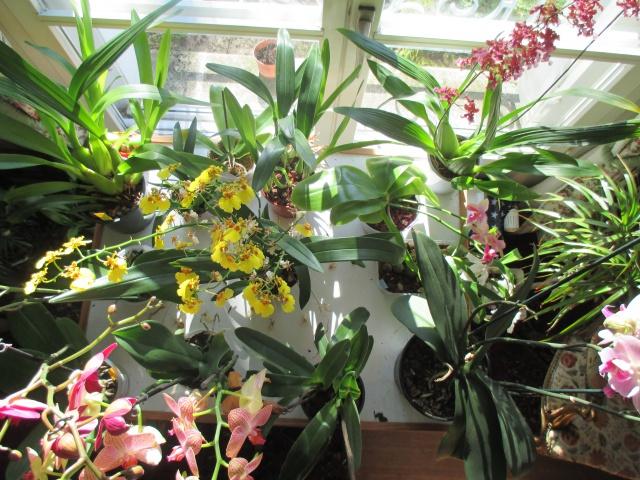 La fenêtre aux orchidées 169321IMG5793