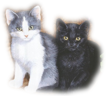 Mes tubages Chats 176671TubMel37