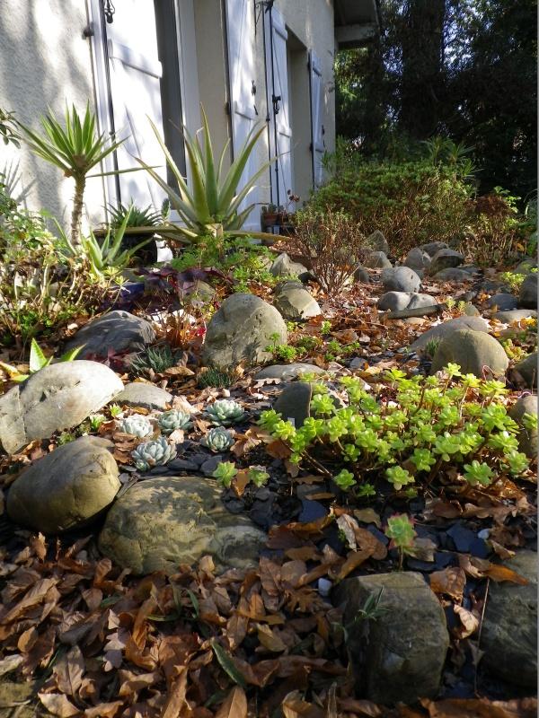 Ma rocaille ...... et mes grassouillettes 178081IMGP3720