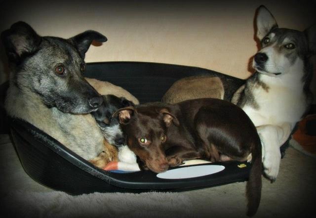 Photo de nos chiens batards! 181160179122356185532499791989965990n
