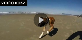 Un boxer handicapé découvre l'océan 18162910014606102037497812510021939435531n